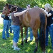 Healing Horses: the Inspiration, Love and Joy it Brings